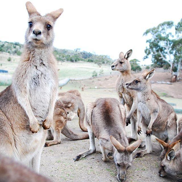 làm visa đi Úc du lịch